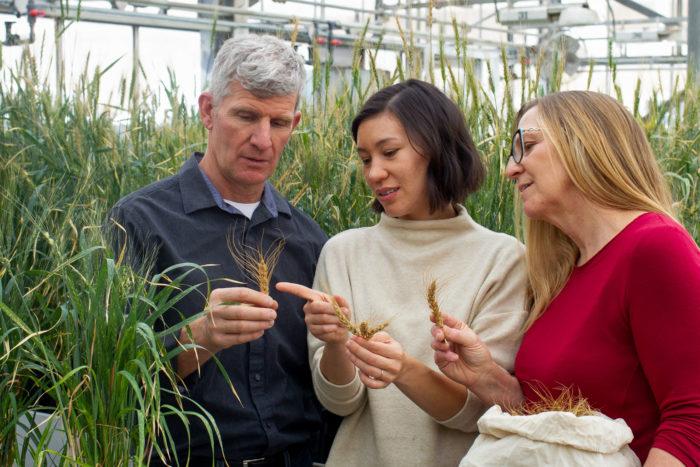 Ian et Linda Grossart (à gauche et à droite), agriculteurs et sélectionneurs de plantes, aux côtés de Michelle Carkner, chercheuse à la University of Manitoba. (Photo : Marianne Helm)